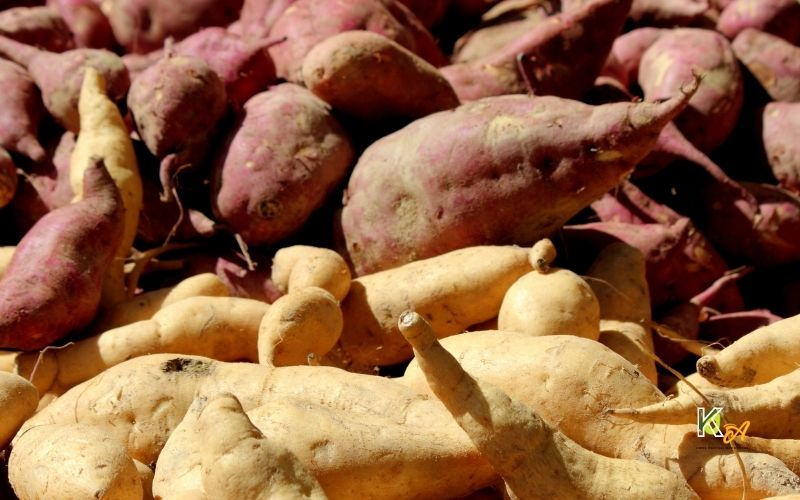image of Are Sweet potatoes Lower in Carbs Than White Potatoes