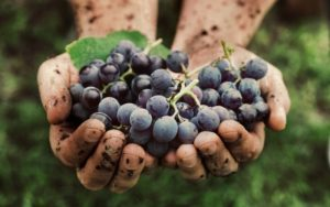 image of Can I Eat a Few Grapes on Low-carb or Keto